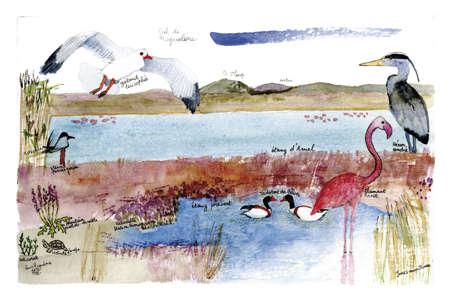 Faune et flore des étangs palavasiens